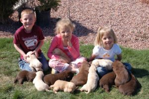 Mariah and the puppies May 06