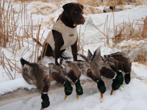 Tag on a cold winter waterfowl hunt